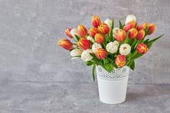Röda och vita tulpan i den vita vasen Feriebakgrund, kopieringsbrunnsort Royaltyfria Foton