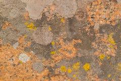 Röda, orange och gråa lavar royaltyfria foton