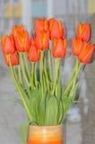 Röda orange tulpan blommar tätt upp med gula marginaler, slut upp royaltyfri bild