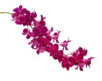Röda orchids. Arkivfoton