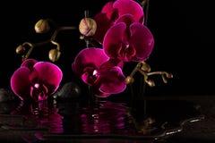 Röda orchids Royaltyfri Foto