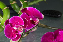 Röda orchids Fotografering för Bildbyråer