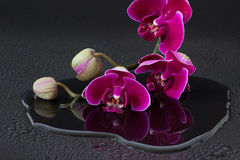 Röda orchids Arkivfoto