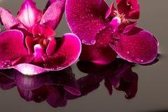 Röda orchids Arkivbild