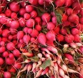 röda organiska rädisor Arkivfoto