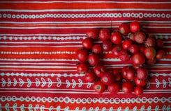 Röda pärlor från hund-ros bär Royaltyfria Bilder