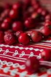 Röda pärlor från hund-ros bär Royaltyfri Foto
