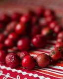 Röda pärlor från hund-ros bär Royaltyfri Fotografi