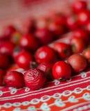 Röda pärlor från hund-ros bär Royaltyfria Foton