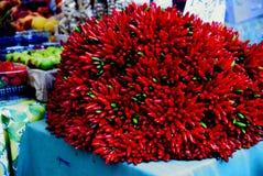 Röda peppar i Venedig Royaltyfria Bilder