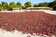 Röda peppar som torkar - Salta - Argentina Royaltyfria Bilder