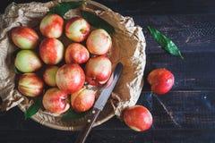 röda persikor Royaltyfria Foton
