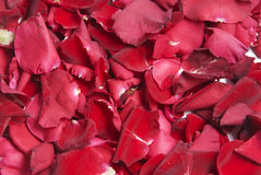 röda petals Royaltyfri Fotografi