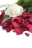 röda petals Fotografering för Bildbyråer