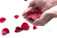 röda petals Royaltyfria Bilder