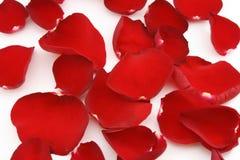 Röda petals Royaltyfri Bild