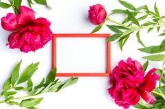 Röda pionblommor och tom fotoram på vit Royaltyfri Foto