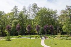 Röda plommonträd bredvid en bäck och en liten träbro royaltyfria foton