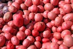 röda potatisar Fotografering för Bildbyråer