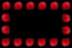 Röda pudervippablommor som dekoreras som en ram Arkivfoto