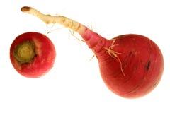 röda rädisor Arkivfoto