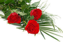 röda ro Royaltyfri Bild