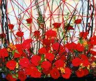 röda ro Arkivbilder
