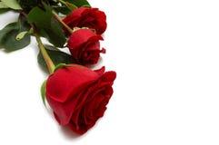 röda ro tre royaltyfri foto