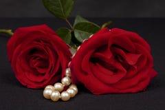 röda romantiska ro arkivfoton