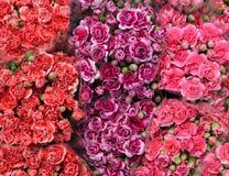 Röda rosa färger och lilor blommar, bukettbakgrund royaltyfri fotografi