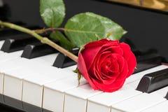 Röda Rose Arkivfoto
