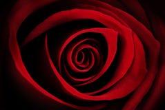 Röda Rose Macro - abstrakt begrepp Arkivbilder