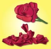 Röda Rose på gul bakgrund Arkivbild