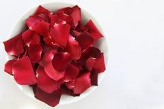 Röda Rose Petals med utrymme för text Arkivfoto