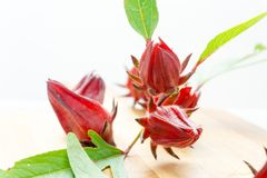 Röda Roselle Healthy Red Royaltyfri Bild
