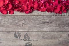 Röda roskronblad på träbakgrunden Rose Petals Border på en trätabell Bästa sikt, kopieringsutrymme den blom- ramen inramniner ser Fotografering för Bildbyråer