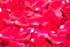 Röda rosor 2 Royaltyfri Fotografi