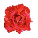 Röda rosor. Arkivbilder