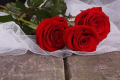 Röda rosor Royaltyfria Foton