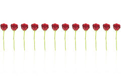 12 röda rosor Royaltyfria Foton