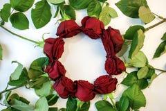 Röda rosor bildar en cirkel med ett kopieringsutrymme för att skriva på en vit bakgrund royaltyfri bild