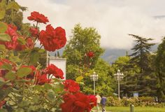 Röda rosor dekorerar gatorna av Yalta på våren, kan in crimea arkivbilder