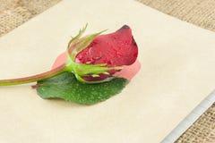 Röda rosor förläggas på den gamla boken Royaltyfri Bild