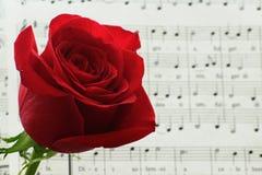 Röda rosor inte på Royaltyfri Bild