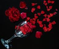 Röda rosor med kronblad, en bra gåva som varje kvinna älskar arkivfoto