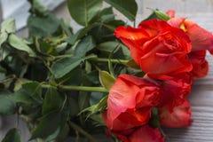 Röda rosor med stammar Fotografering för Bildbyråer