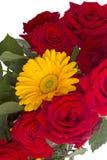 Röda rosor och gul gerber Arkivbild