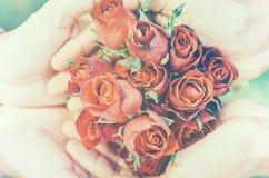 Röda rosor på händerna av man- och kvinnligpar Mjuk fokus Im arkivbild
