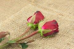 Röda rosor på säckvävtappningbakgrund Arkivfoton