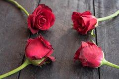 Röda rosor på wood bakgrund, Retro tappning, Arkivfoton